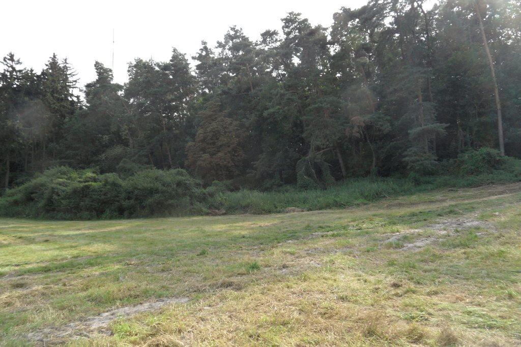 Działka budowlana na sprzedaż Góra  35000m2 Foto 5