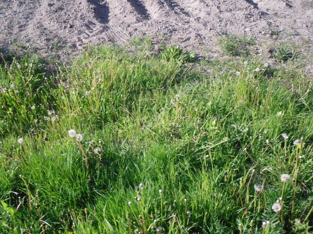 Działka siedliskowa na sprzedaż Ołtarzew  6433m2 Foto 12