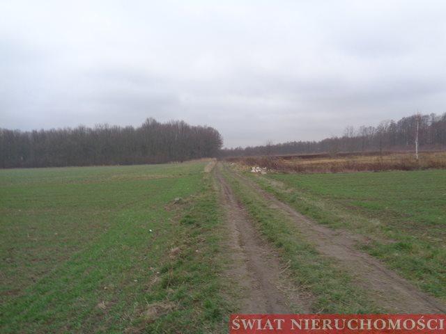 Działka budowlana na sprzedaż Wilczyce  15000m2 Foto 1