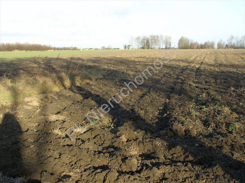 Działka rolna na sprzedaż Skierniewice, Skierniewice  50000m2 Foto 1