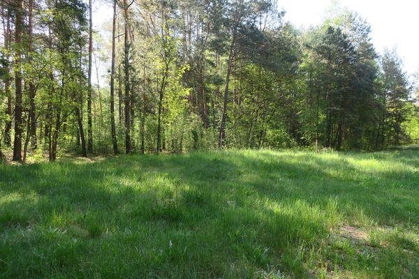 Działka rolna na sprzedaż Słupica  8100m2 Foto 4