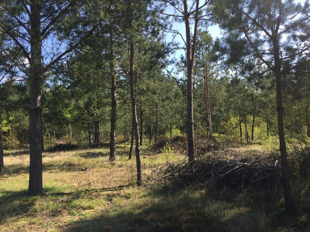 Działka siedliskowa na sprzedaż Wężówka  4000m2 Foto 4