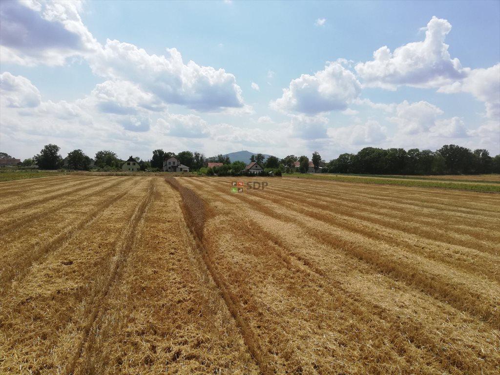 Działka rolna na sprzedaż Michałowice  77000m2 Foto 2