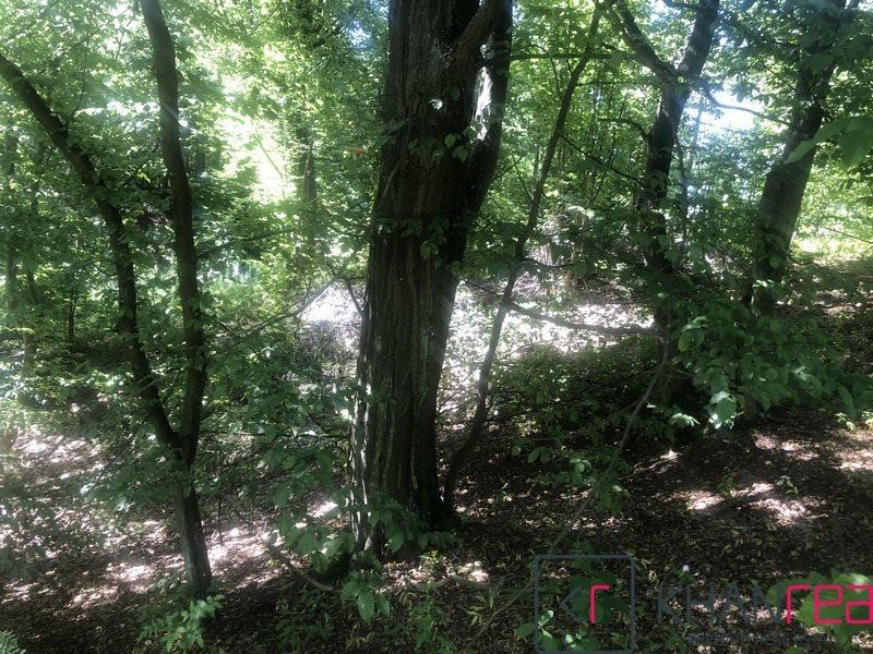 Działka leśna na sprzedaż Sobików  15000m2 Foto 5