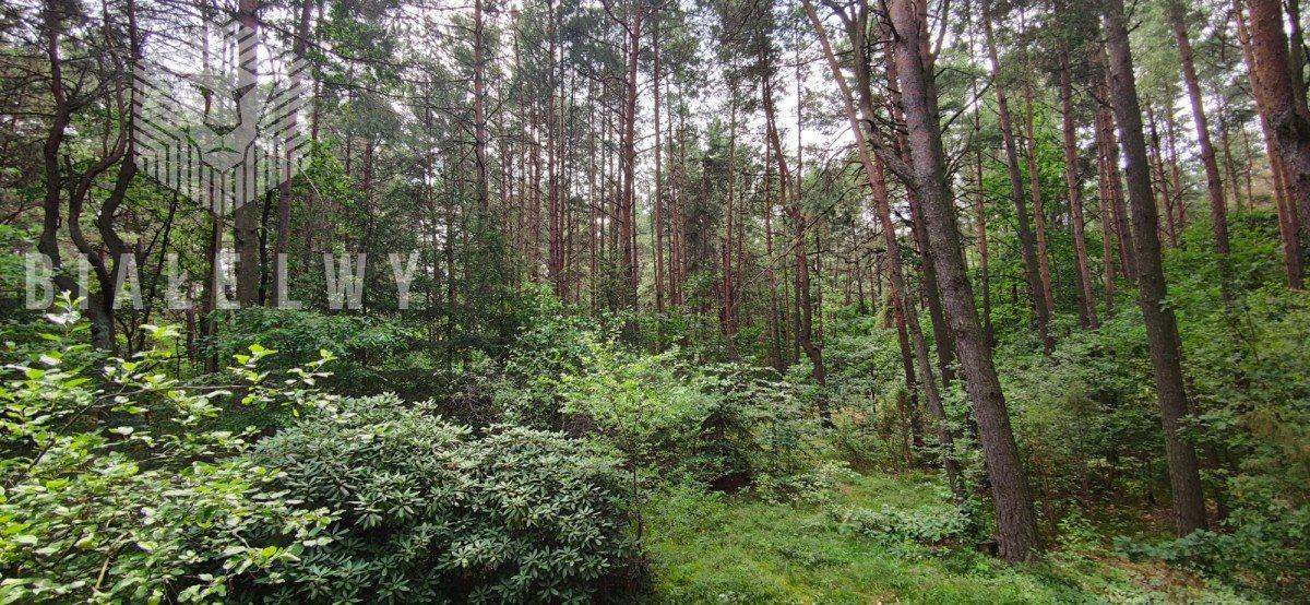 Działka leśna na sprzedaż Radachówka  1200m2 Foto 1