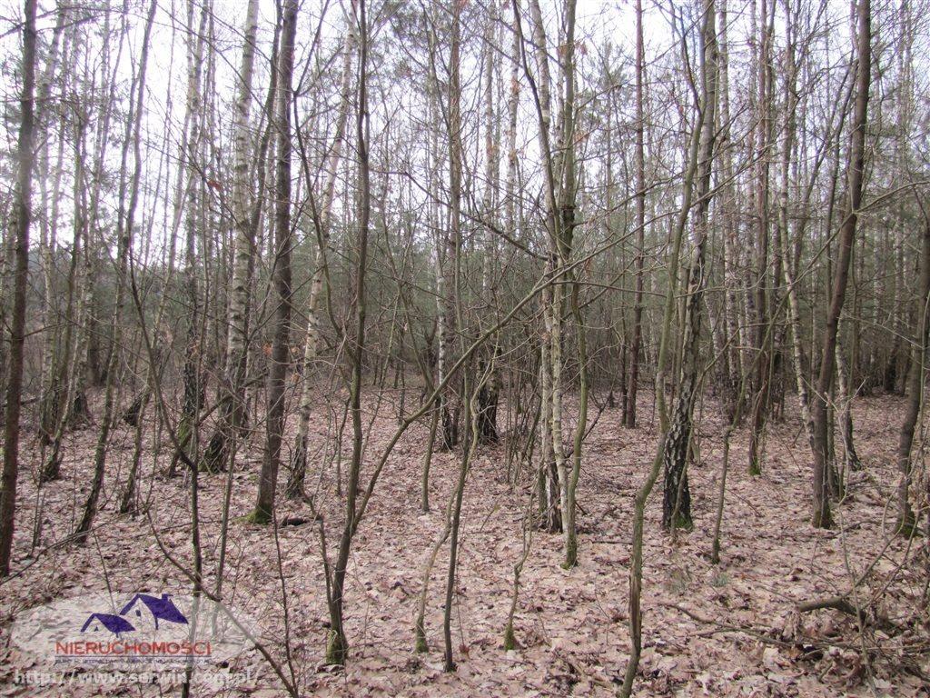 Działka leśna na sprzedaż Gruszów Wielki  11500m2 Foto 2