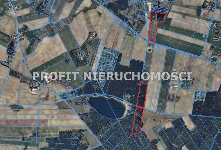 Działka leśna na sprzedaż Linia  77931m2 Foto 1