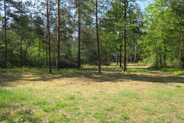 Działka rolna na sprzedaż Słupica  8100m2 Foto 6