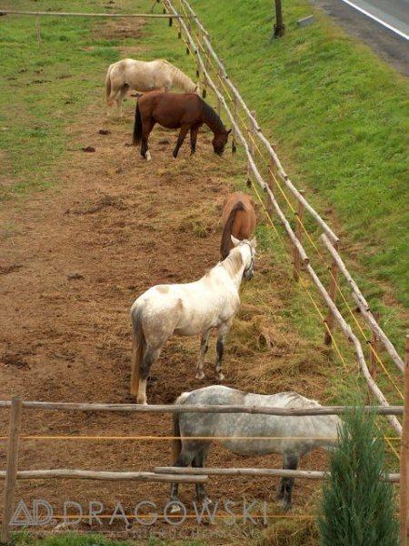 Działka rolna na sprzedaż Kudowa-Zdrój  7651m2 Foto 2