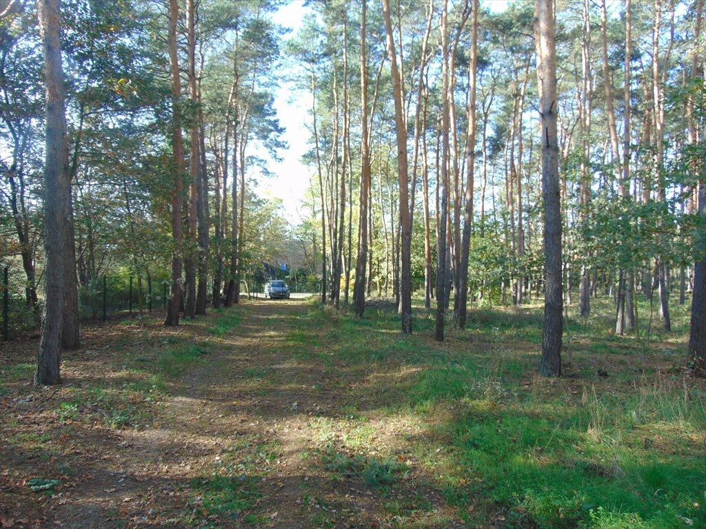 Działka komercyjna na sprzedaż Jerzykowo, Sosnowa  2197m2 Foto 4