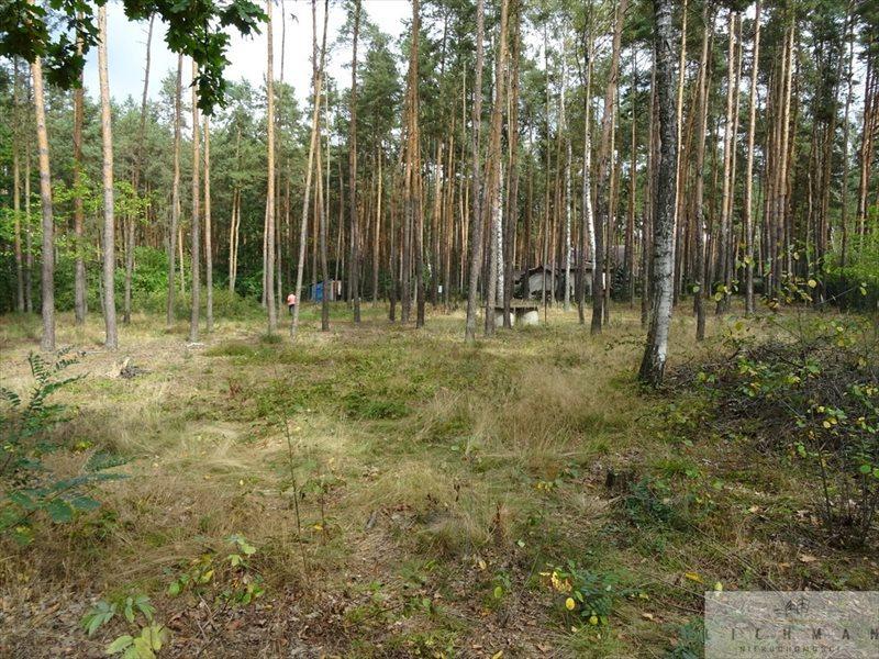 Działka leśna na sprzedaż Dziektarzew  2537m2 Foto 1