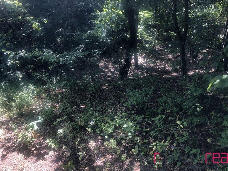 Działka leśna na sprzedaż Sobików  15000m2 Foto 8