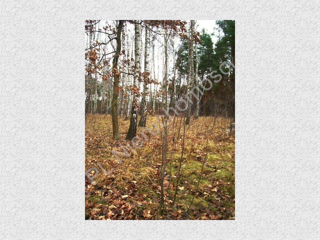 Działka leśna na sprzedaż Stefanowo  1900m2 Foto 4