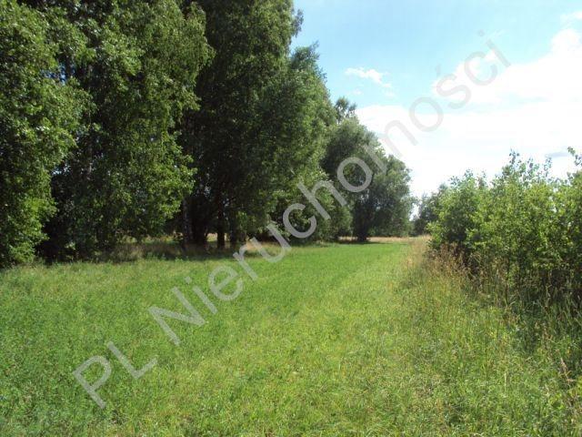 Działka rolna na sprzedaż Holendry Baranowskie  4000m2 Foto 5