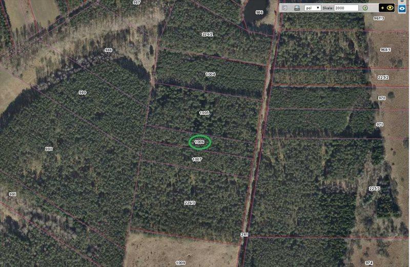 Działka leśna na sprzedaż Jankowo-Młodzianowo  4200m2 Foto 3