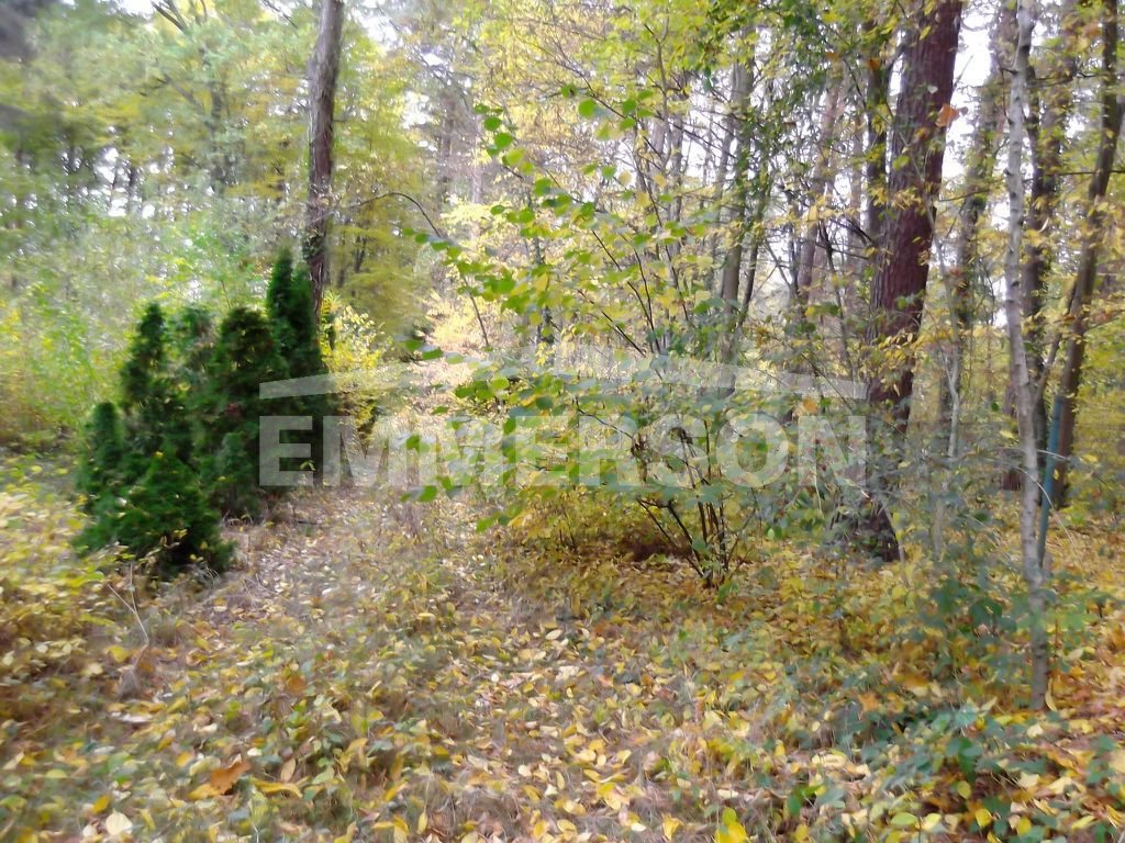 Działka leśna na sprzedaż Piaseczno, Zalesie Dolne  2511m2 Foto 1