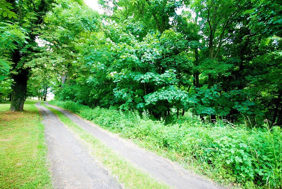 Działka leśna na sprzedaż Grodzanów  46000m2 Foto 4