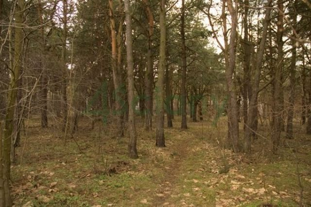 Działka leśna na sprzedaż Warszawa, Wawer, Falenica  1019m2 Foto 2