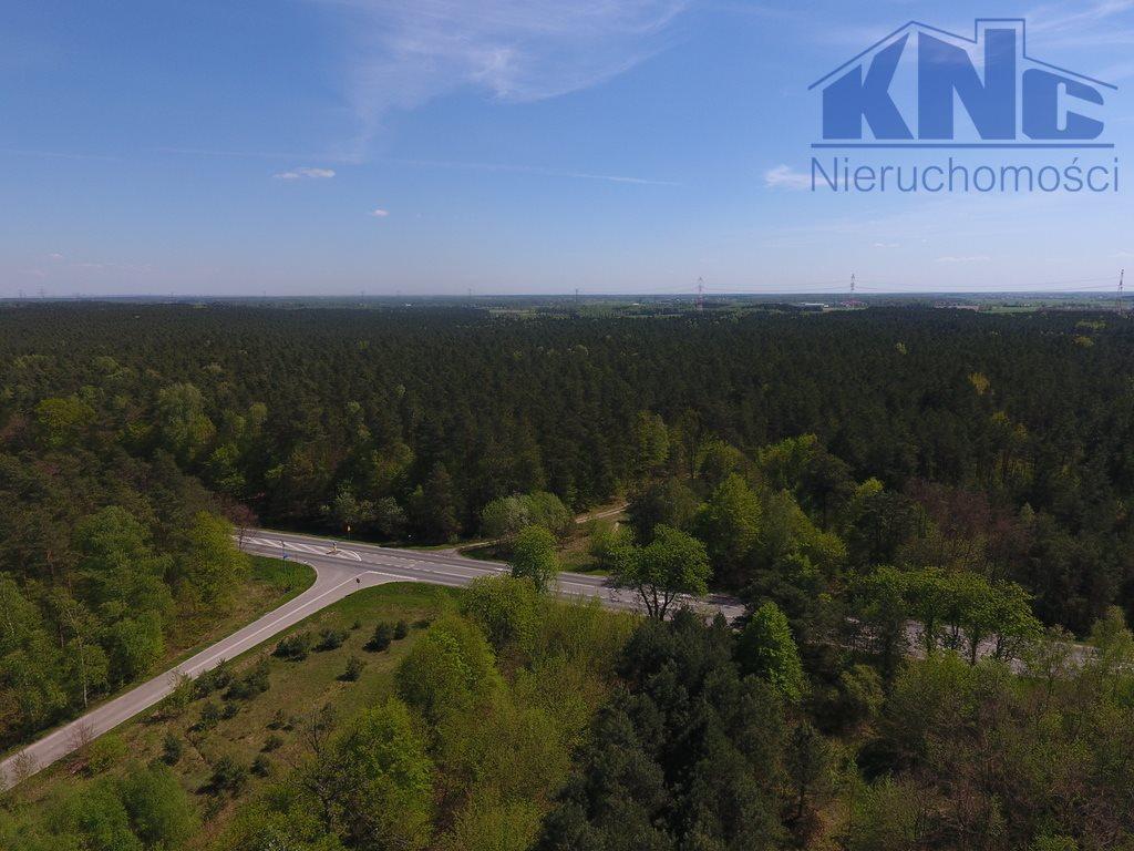 Działka leśna na sprzedaż Laskowiec  4200m2 Foto 3