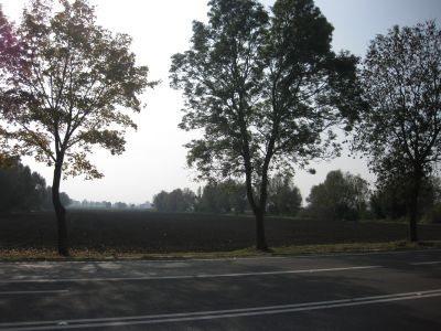 Działka inna na sprzedaż Kazimierzowo, Kazimierzowo  21734m2 Foto 2