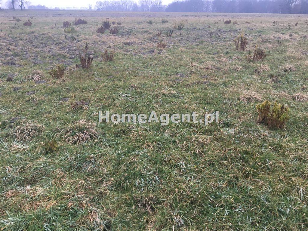 Działka rolna na sprzedaż Mikołów, Paniowy, ok. Rybołówka  6519m2 Foto 8