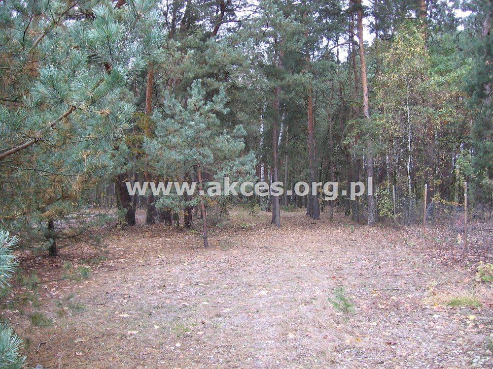 Działka leśna na sprzedaż Kędzierówka  3800m2 Foto 4