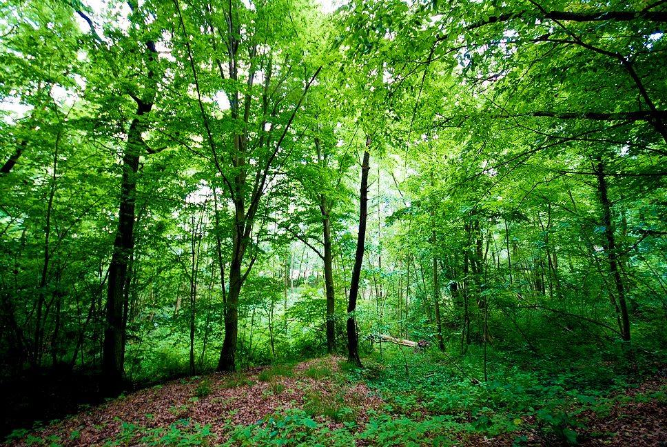 Działka leśna na sprzedaż Grodzanów  46000m2 Foto 2