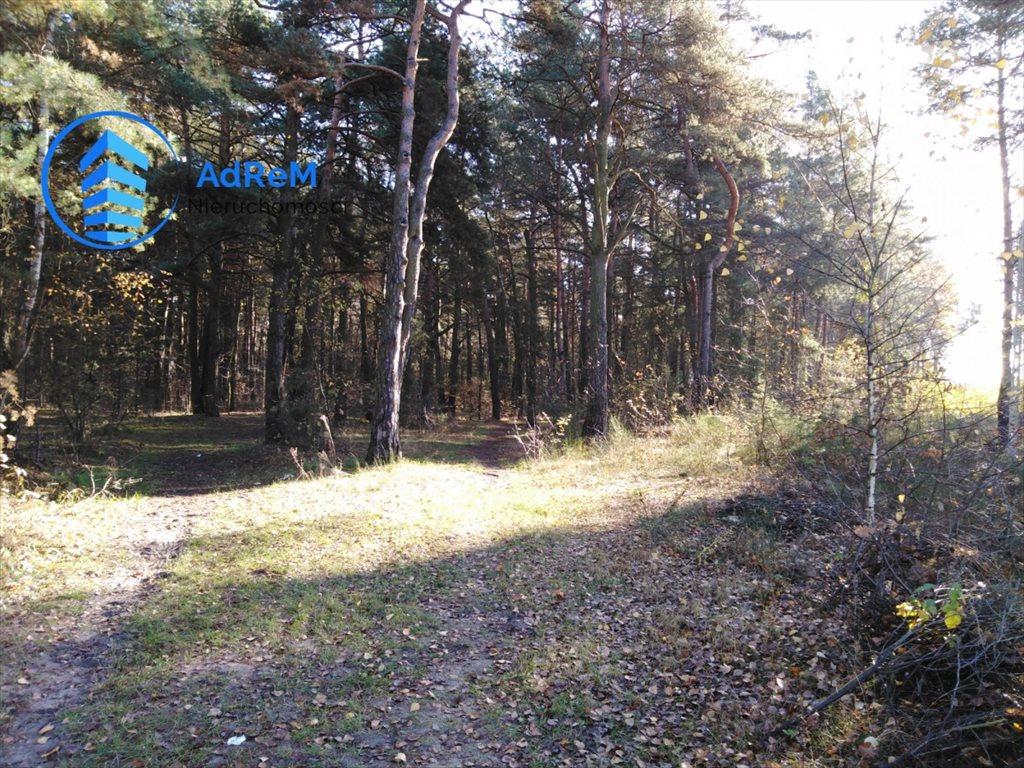 Działka leśna na sprzedaż Jeziórko, Świerkowa  1000m2 Foto 5