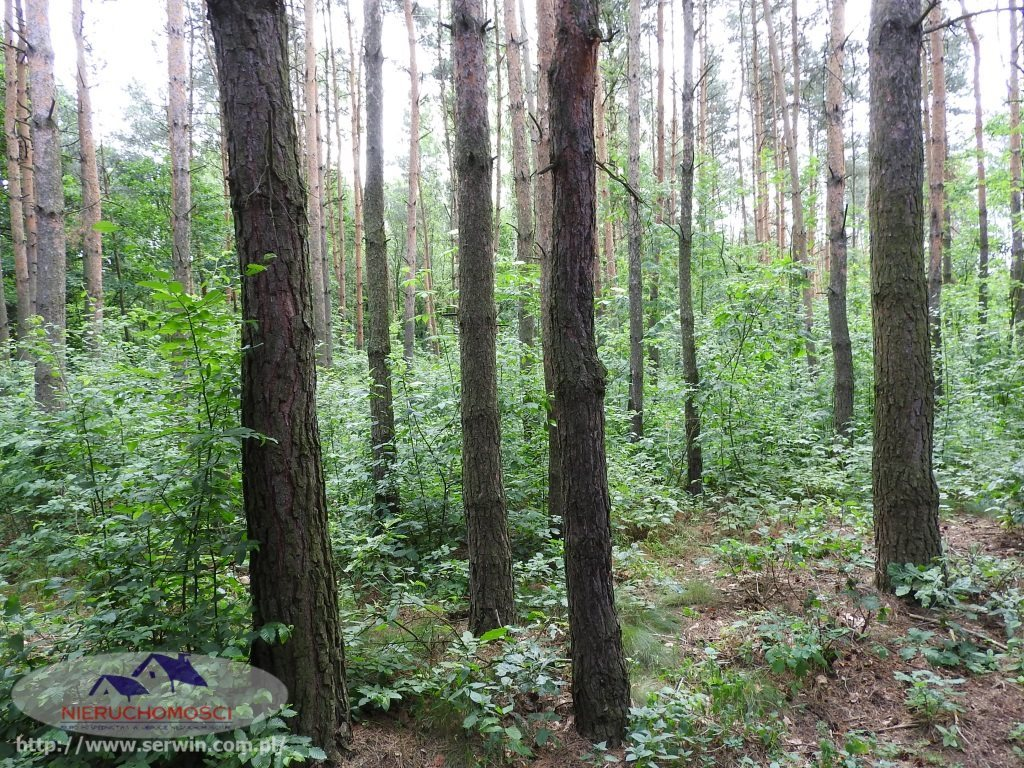 Działka leśna na sprzedaż Sieradza  7700m2 Foto 1
