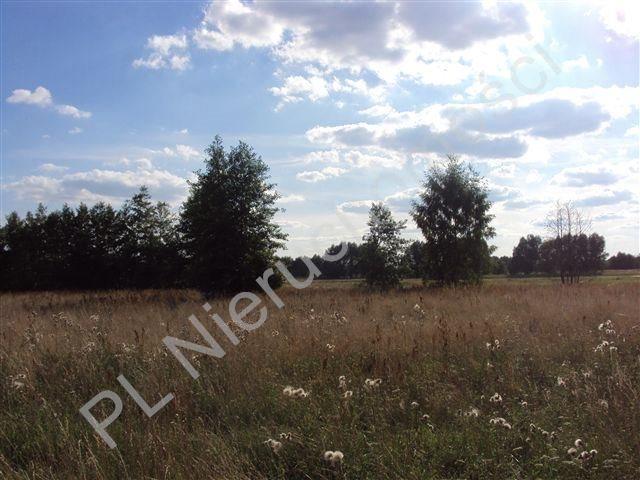 Działka rolna na sprzedaż Holendry Baranowskie  8300m2 Foto 4