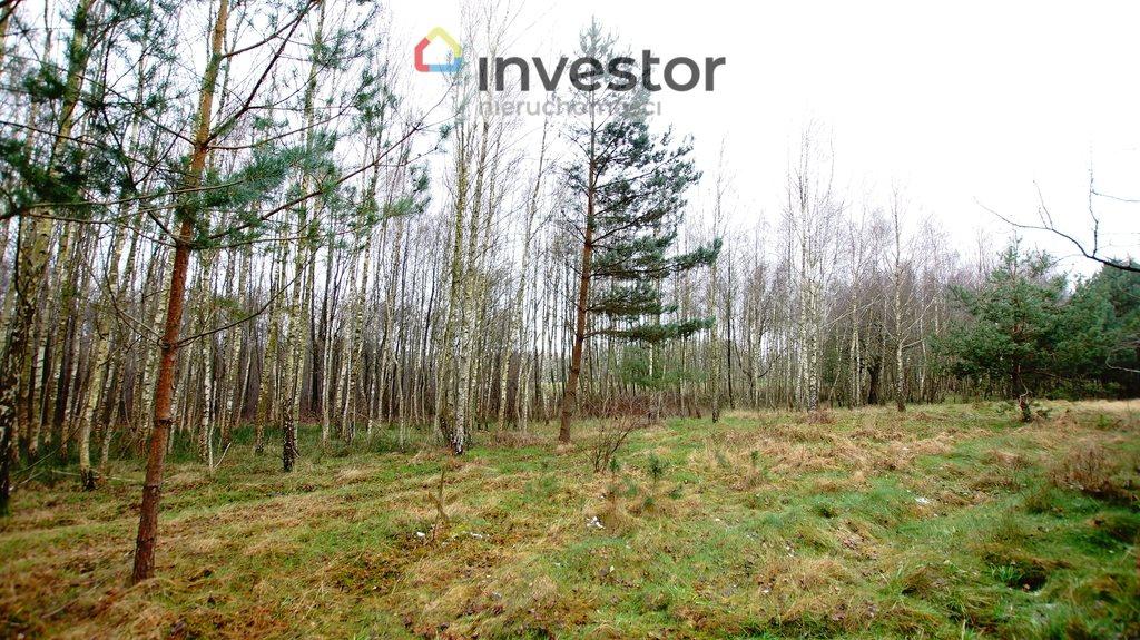 Działka leśna z prawem budowy na sprzedaż Bukowa Wielka  39157m2 Foto 6