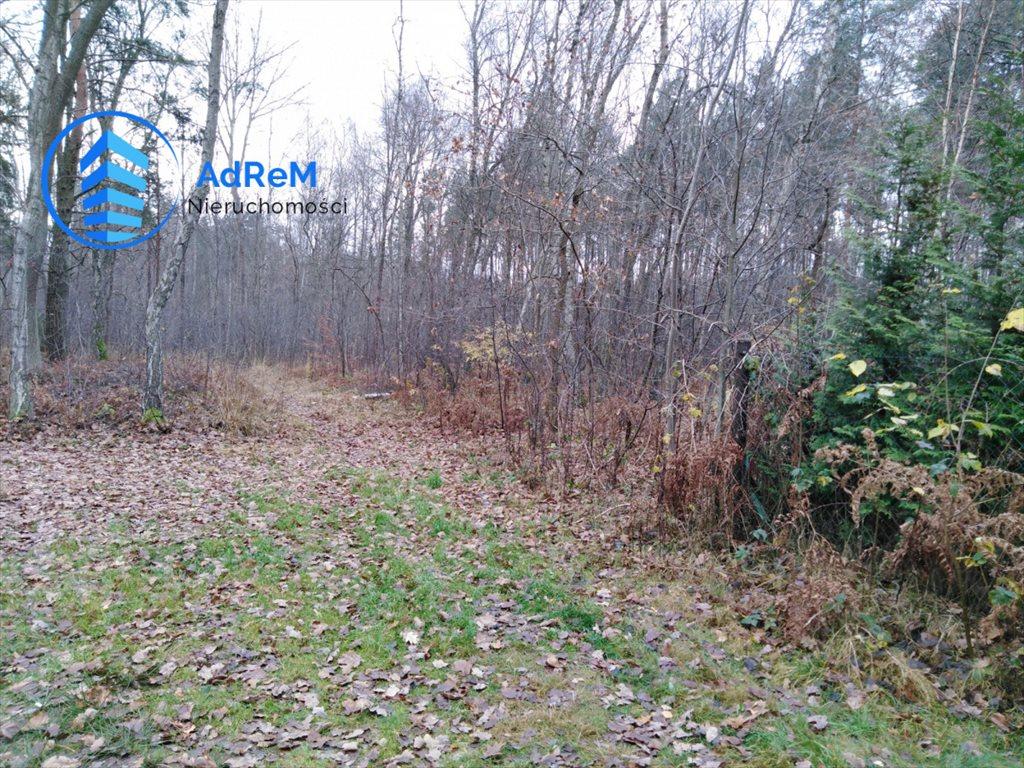 Działka leśna na sprzedaż Nowy Prażmów, Leśna  1521m2 Foto 2