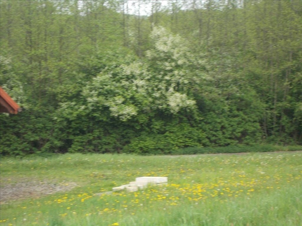 Działka rolna na sprzedaż Sułów, Biskupice  15000m2 Foto 2