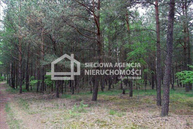 Działka leśna na sprzedaż Czarniż  44100m2 Foto 2