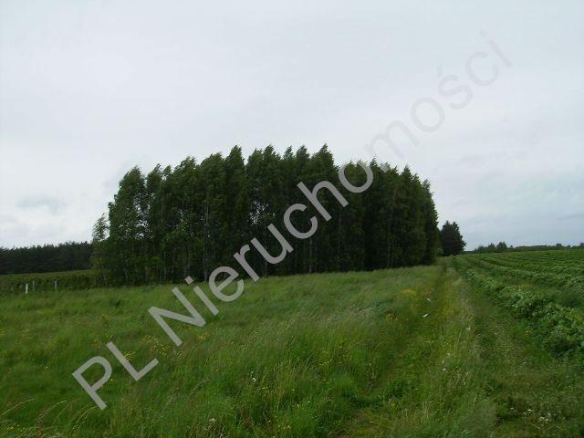 Działka rolna na sprzedaż Mszczonów  10000m2 Foto 1