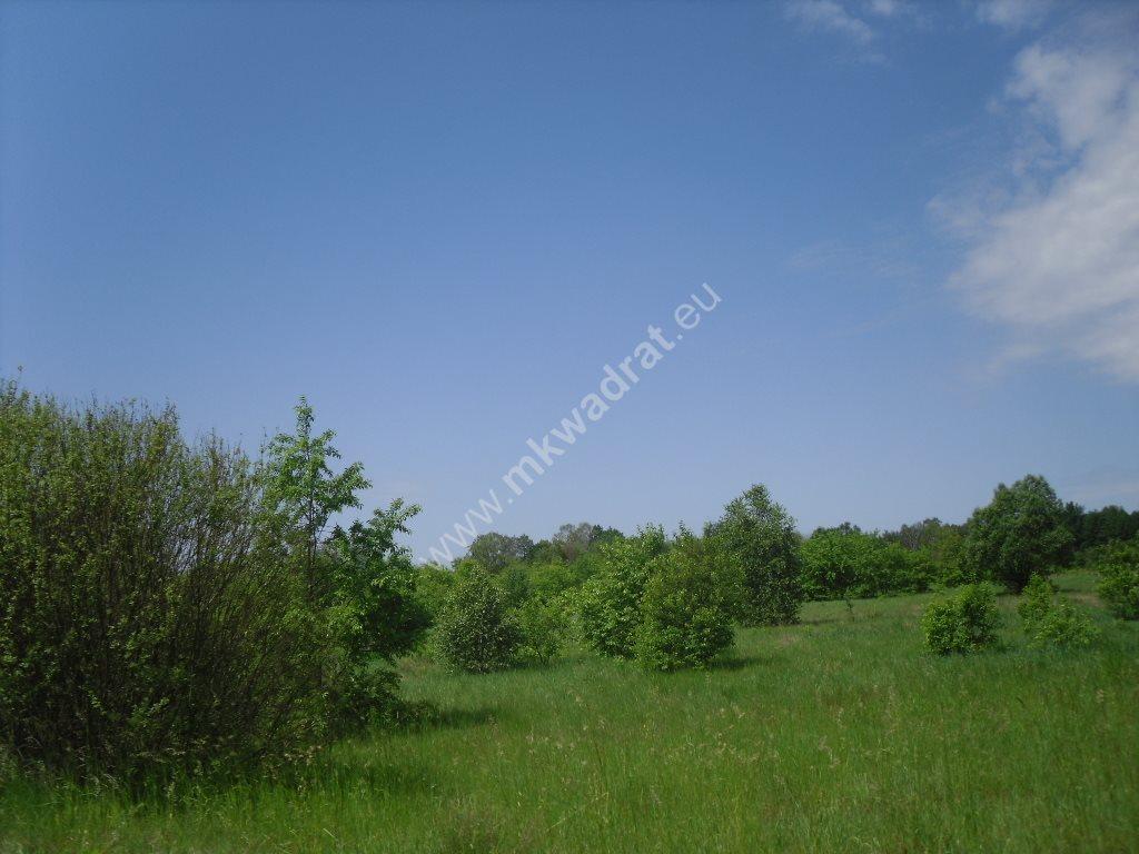 Działka siedliskowa na sprzedaż Sowia Wola  15000m2 Foto 8