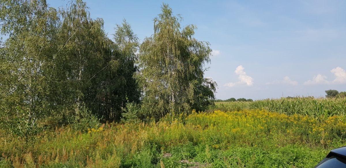 Działka rolna na sprzedaż Czernica  9534m2 Foto 1