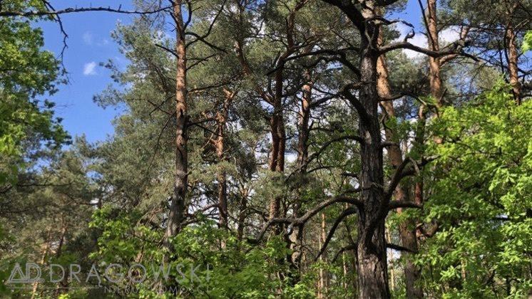 Działka leśna na sprzedaż Wilga  5369m2 Foto 3