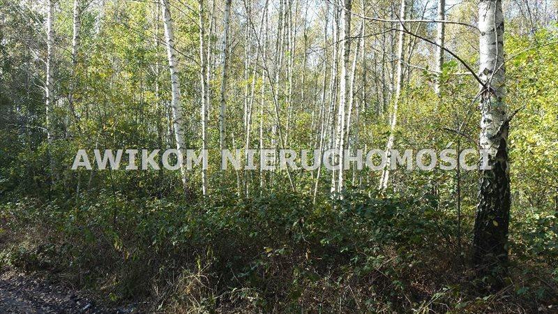 Działka rolna na sprzedaż Jaktorów, Międzyborów  4200m2 Foto 3