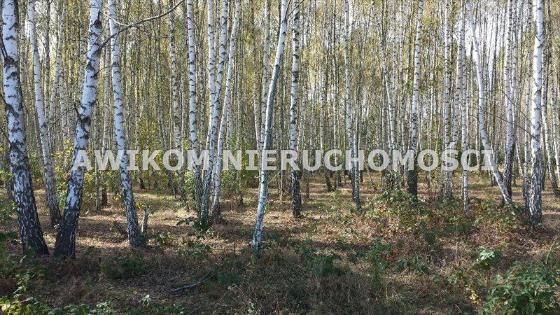Działka rolna na sprzedaż Jaktorów, Międzyborów  4200m2 Foto 1