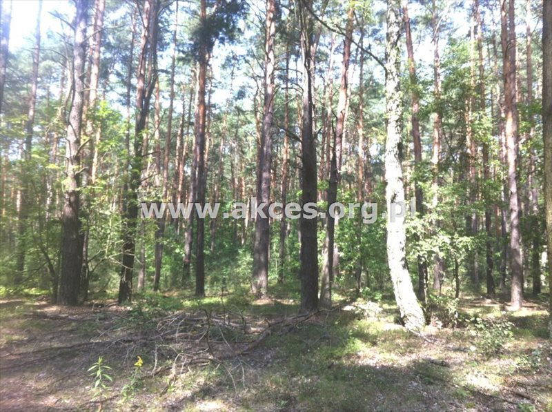 Działka inna na sprzedaż Sękocin Stary, Sękocin-Las  2100m2 Foto 4