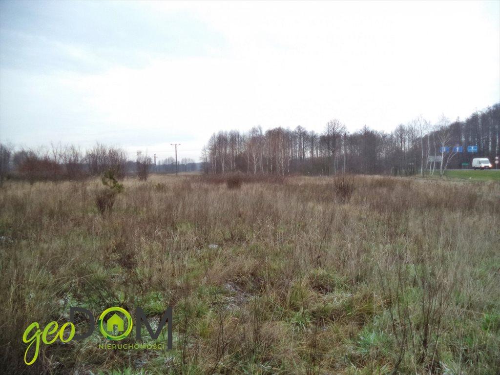 Działka rolna na sprzedaż Terespol  21544m2 Foto 3