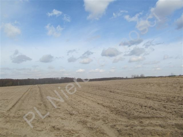 Działka rolna na sprzedaż Transbór  11200m2 Foto 3