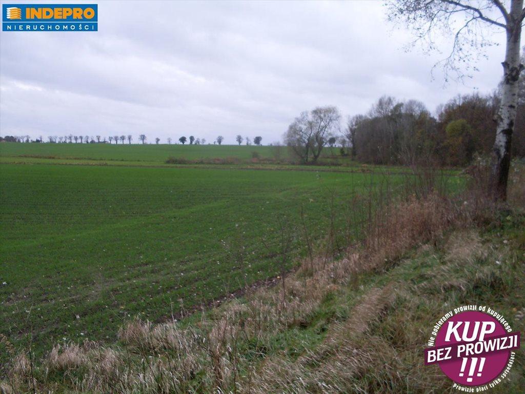 Działka rolna na sprzedaż Krusza Duchowna-Krusza Zamkowa  3536m2 Foto 1