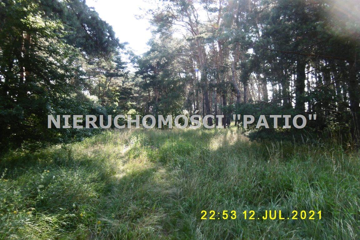 Działka leśna na sprzedaż Kórnik, Radzewo, Dworzyska  4700m2 Foto 1