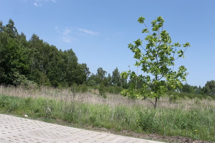 Działka rolna na sprzedaż Łódź, Widzew, Stare Moskule, Opolska  14997m2 Foto 4
