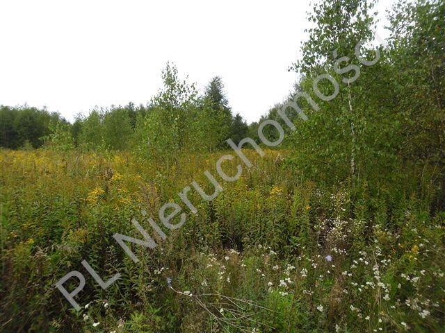 Działka rolna na sprzedaż Olesin  9983m2 Foto 8