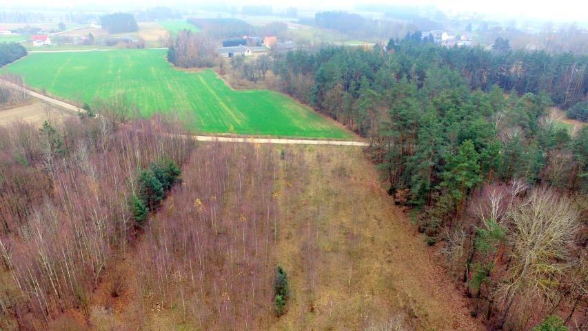 Działka leśna na sprzedaż Stary Cydzyn  8000m2 Foto 8