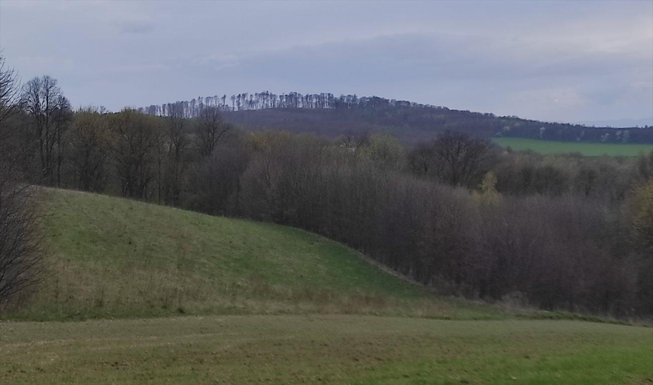Działka siedliskowa na sprzedaż Przeworno, Romanów, Na Południe od Wrocławia  33558m2 Foto 4