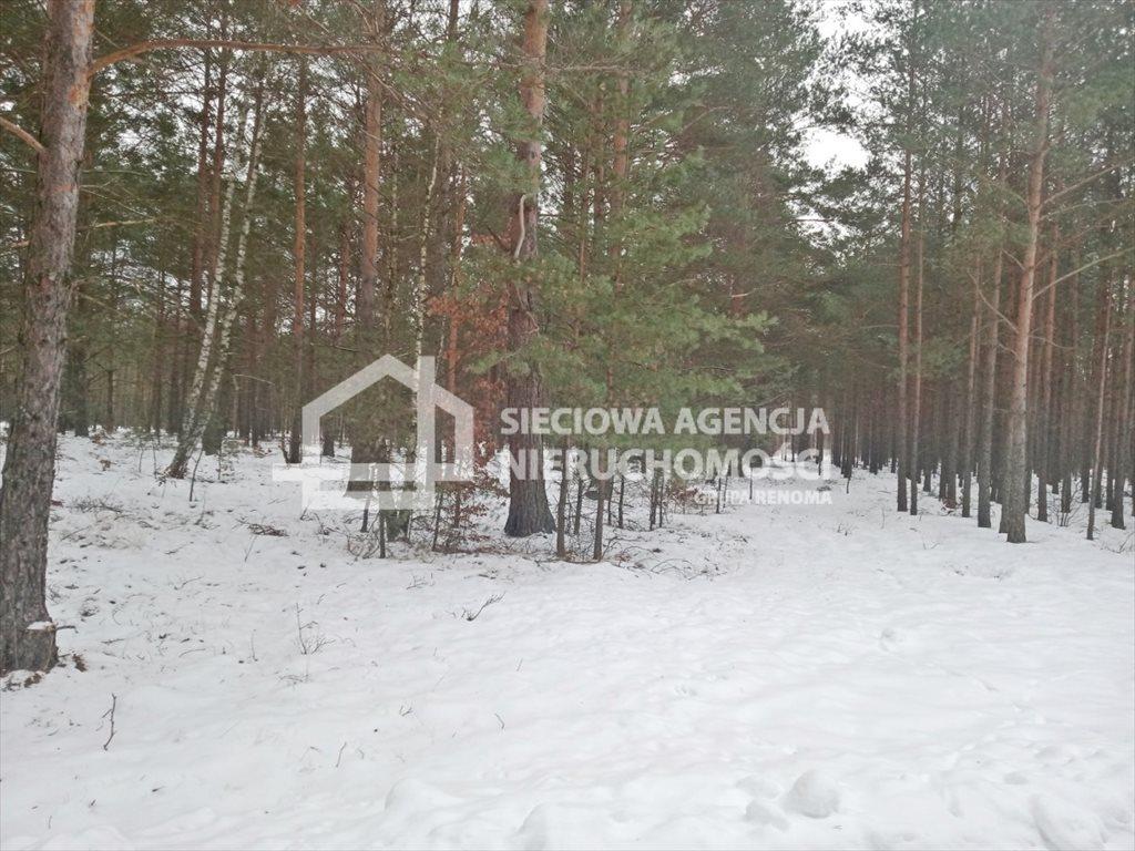 Działka leśna na sprzedaż Zawada  5155m2 Foto 1